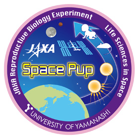 space pup.png